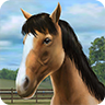 Image for My Horse